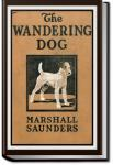 """Boy"" The Wandering Dog 