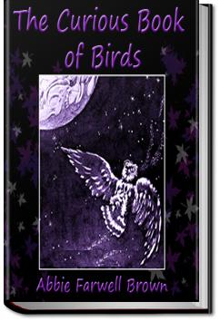 The Curious Book of Birds   Abbie Farwell Brown