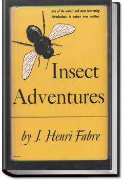 Insect Adventures | Jean-Henri Fabre and Louise Hasbrouck Zimm