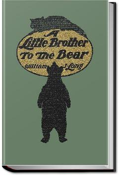 A Little Brother to the Bear and other Animal Stories | William J. Long