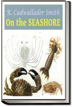 On the Seashore | R. Cadwallader Smith