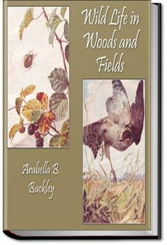 Wild Life in Woods and Fields | Arabella B. Buckley